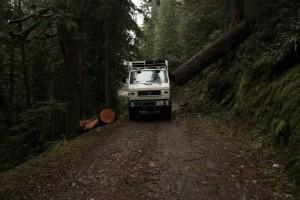 008 Piste durch Wald