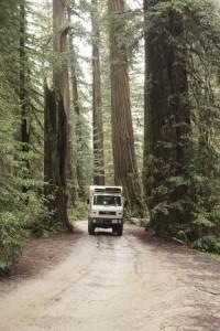 012 Redwood NP 1