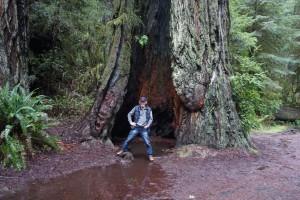 013 Redwood NP 2