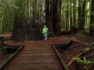 016 Redwood NP 3