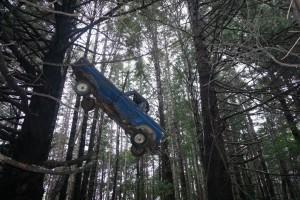 019 Auto im Baum