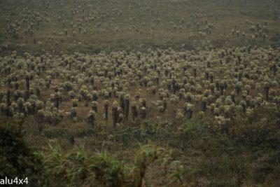 017 Kaktusse