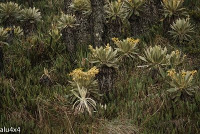 018 Kaktusse