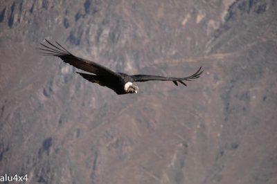 035 Colca Canyon