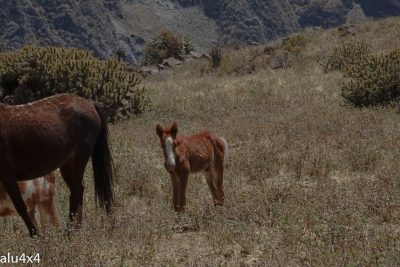 039 Colca Canyon