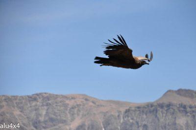 040 Colca Canyon